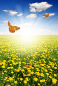Dandelions with butterfly — Stock Photo