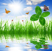 Clover and butterflies — Stock Photo