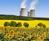 Campo de energia nuclear planta e girassol — Foto Stock