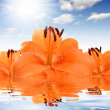 Floral background with orange lily — Stock Photo #27862893