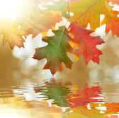Autumn oak leaves mirrored on water level — Stock Photo