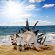 Stock Photo: Conch shell on beach