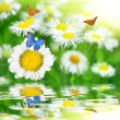 Daisies with butterflies  — Stock Photo