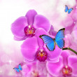 Purple orchid with butterflies — Stock Photo #29928383