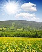 Národní park Šumava — Stock fotografie