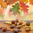 Autumn leaves with oak acorns — Stock Photo