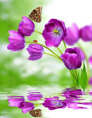 Fresh purple tulips — Stock Photo