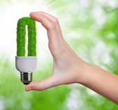 Eco energy bulb — Stock fotografie
