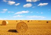 稻草包 — 图库照片