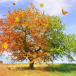 Season tree — Stockfoto