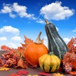 Pumpkins — Stock Photo #31352545