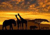 Giraffes,elephant and rhino — Stock Photo