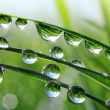Stock Photo: Dew drops