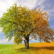 Stockfoto: Season tree