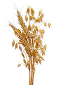 Oats and wheat — Stock Photo