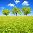spring landscape — Stock Photo #34613723