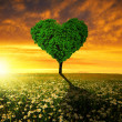 Tree in the shape of heart — Stockfoto