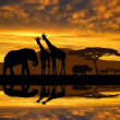 Stock Photo: Silhouette elephant,giraffes,rhino and zebras