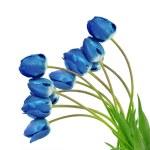 Dewy blue tulips — Stock Photo #34785999