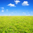 Spring meadow — Stock Photo #35226951