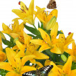Stock Photo: Lily with butterflies