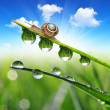 Snail on dewy grass — Foto de Stock