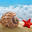 Conch shell with starfish — Stock Photo