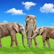 Elephants — Stockfoto