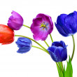 Colorful tulips — Stockfoto