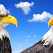 Stock Photo: Bald Eagle