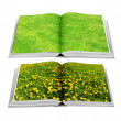 Grass and dandelion on book — Stock Photo