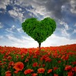 Poppy field with tree from the shape heart — Stock fotografie