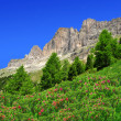 Dolomite peaks, Rosengarten — Stock Photo #36910081
