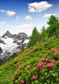 Ober Gabelhorn - Swiss alps — Stock Photo