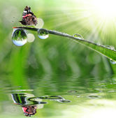 çiğ ve kelebek — Stok fotoğraf