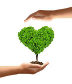 Growing tree in the shape heart in hand — Stock Photo