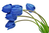 Dewy blue tulips — Stock Photo