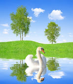 Spring landscape with swan — Stockfoto