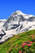 Mount Lyscamm — Zdjęcie stockowe