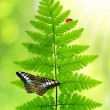 Fern with butterfly — Stock Photo
