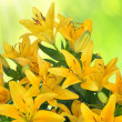Stock Photo: Yellow Lily