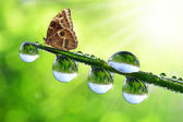 Dew drop and butterfly — Stock Photo