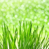Dewy green grass — Stock Photo