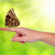 Butterfly Morpho sitting on hand — Stock Photo #40156717
