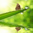 Green grass and butterfly Morpho — Stock Photo #40348927