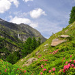 Valley Saastal - Swiss Alps — Stock fotografie #40540759