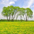 Trees on spring meadow — Stock Photo