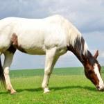 Pferd — Stockfoto #41257247