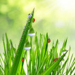 Fresh morning dew on a spring grass — Stock Photo #41377695