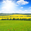 Stock Photo: Spring landscape